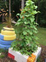 Erstellen Sie interessante und bunte modulare Gartengehege, die Boden und Pflanzen beherbergen können.